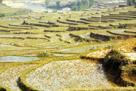 Rice cultures on terraces in the mountains near Sapa in Vietnam Stock Photo - 17266910