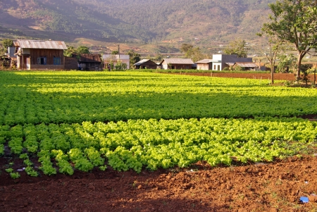 agronomic: Agriculture in the village Lang Conga in Vietnam