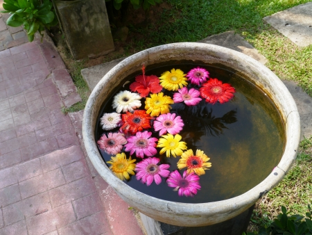 A concrete bowl with colorful flowers Stock Photo - 17697129