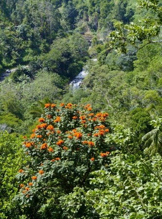 ella: The mountains round the Ella Cap with an African tulip tree in Sri Lanka Stock Photo