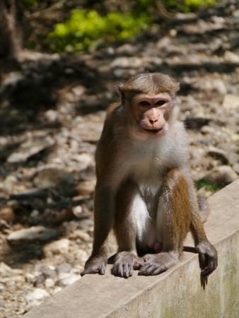 Monkey Stock Photo - 17819567