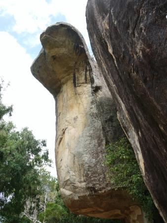 The lions rock  Sigiriya  an ancient rock fortress in Sri Lanka Stock Photo - 18230121