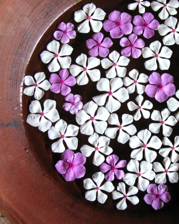 White and pink jasmine flowers floating in a bowl Stock Photo - 18232095