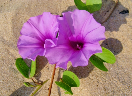 the beach of Sri Lanka with pink flowers Stock Photo - 18216329