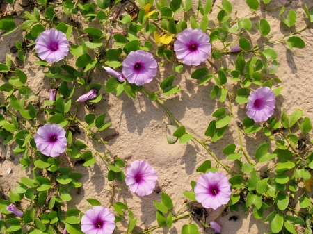 the beach of Sri Lanka with pink flowers Stock Photo - 18216354