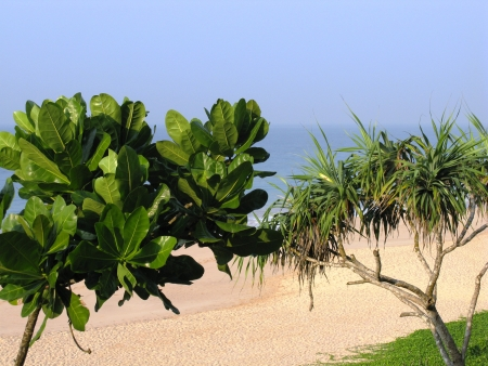 tectorius: The beach of Koggala in Sri Lanka with breakers in the Indian ocean green plants and a Pandanus tectorius  screwpine  tree and a sea poison tree  Stock Photo