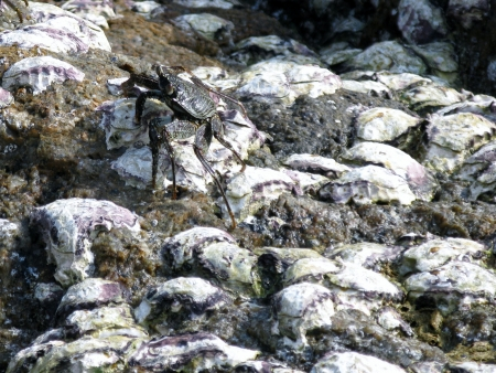 A crab on the rocks of the south west coast of Sri Lanka Stock Photo - 18216351