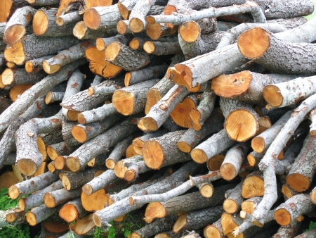 Wood for the fire place Stock Photo - 18288245