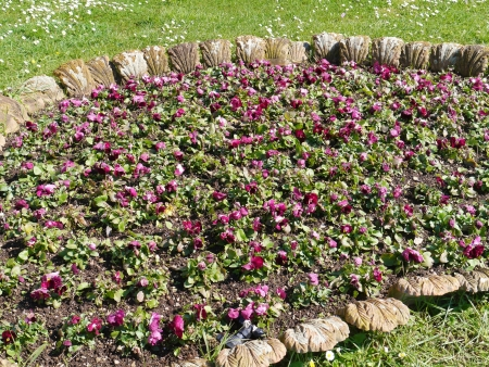 garzoni: Bloom bed with pansy flowers in pastel colors in a park in spring