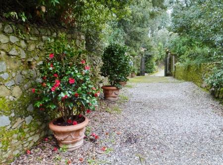 The garden of the villa Garzoni in Collodi in Italy Stock Photo - 18876422