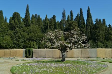 The garden of the villa la Petraia in Castello  in Italy in spring Stock Photo - 18891438