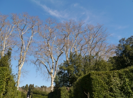 Barren branches of a tree opposite a blue sky in spring Stock Photo - 19653581