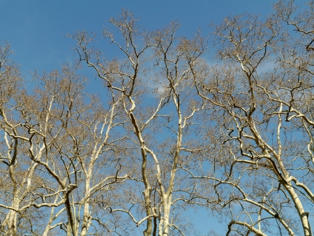Barren branches of a tree opposite a blue sky in spring Stock Photo - 19653586