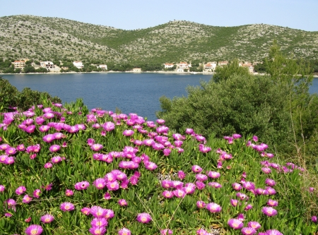 magenta flowers: View from the mountains around the hidden bay of the island Lastovo in Croatia with magenta flowers Stock Photo