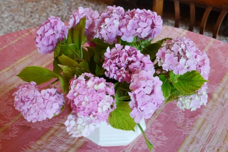 A vase with pink blooming hortensia flowers on a table photo