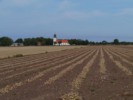 A field with grubbed onions and the church of Smedby in the back on the island Oeland in Sweden photo