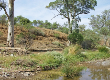 maintains: A landscape in the Flinders Ranges national park in South Australia