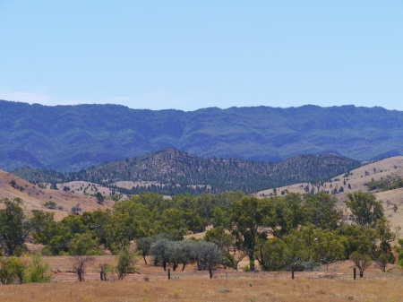 flinders: Landscape in the Flinders Ranges
