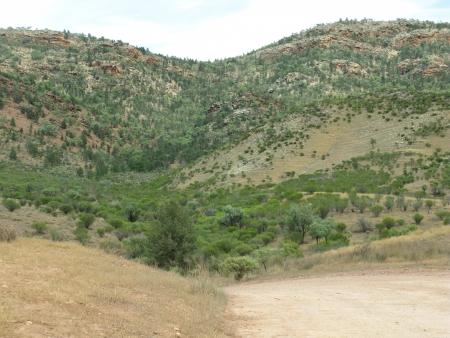 maintains: Landscape in the Flinders Ranges