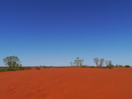 the outback: Growth and the red earth of the outback in Australia Stock Photo