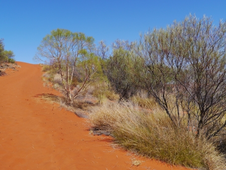 Growth and the red earth of the outback in Australia photo