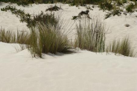Little sahara on Kangaroo islandin Australia photo