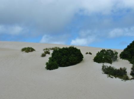 Little sahara on Kangaroo island in Australia photo