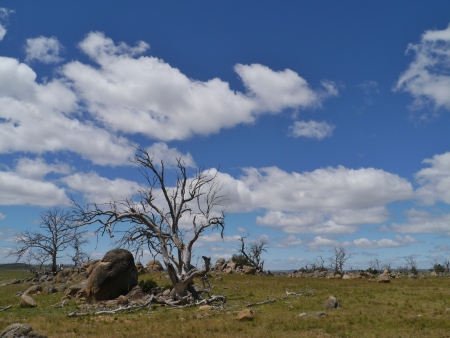 Dead tree and boulders near Cooma in Australia photo