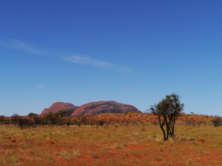 tjuta: Growth on the red earth of the outback in Australia