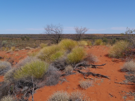 Growth on the red earth of the outback in Australia photo