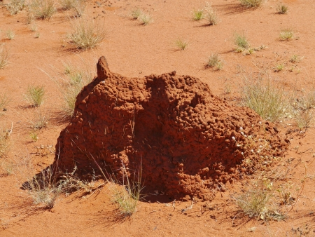 Termite mound in the Northern territory in Australia photo