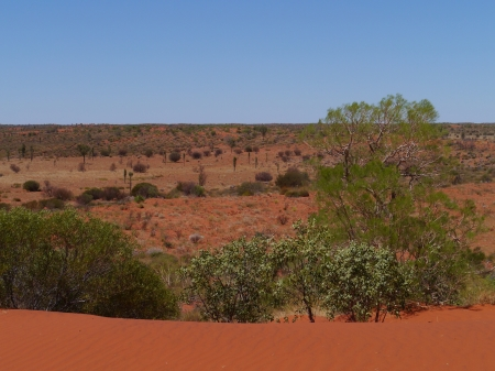 The red dunes with desert vegetation in the northern territory in Australia photo