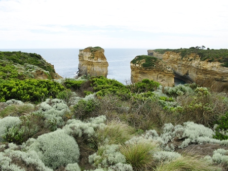 vegatation: The vegetation around the Loch Ard Gorge is part of Port Campbell National Park Victoria in Australia