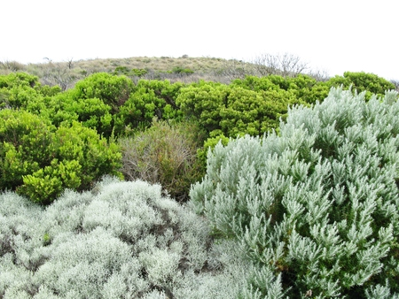 The vegetation around the Loch Ard Gorge is part of Port Campbell National Park Victoria in Australia photo