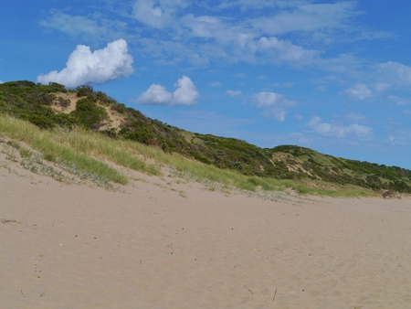 The beach and the dunes with vegetation of Cape Otway in Victoria in Australia photo