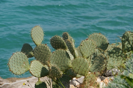 globular: A globular cactus plant with a hairy and thorny skin