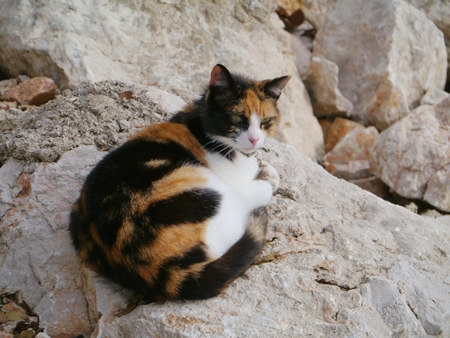 A colorful patched cat on rocks with the same colors photo