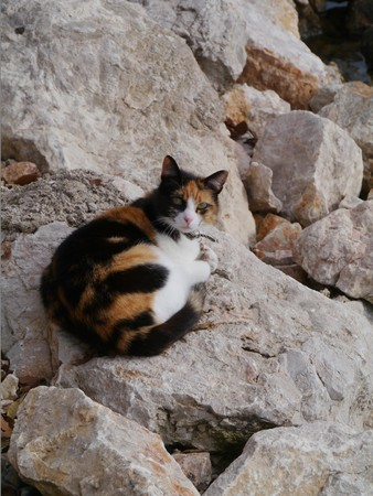 patched: A colorful patched cat on rocks with the same colors Stock Photo