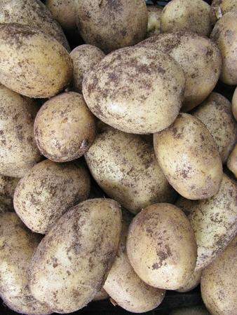 greengrocer: Patatas en la verduler�a en el mercado