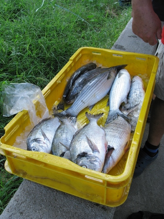 kinds: Various kinds of fresh fishes displayed in a container of a fisherman