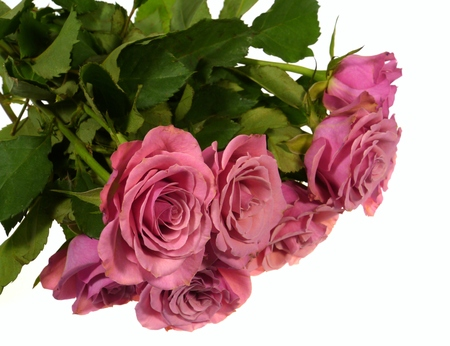 charm: Charm pink roses as a gift on Valentines day over white