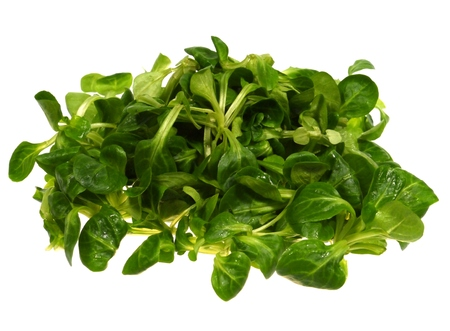 cornsalad: Corn salad (Valerianella locusta) a edible leaf vegetable over white