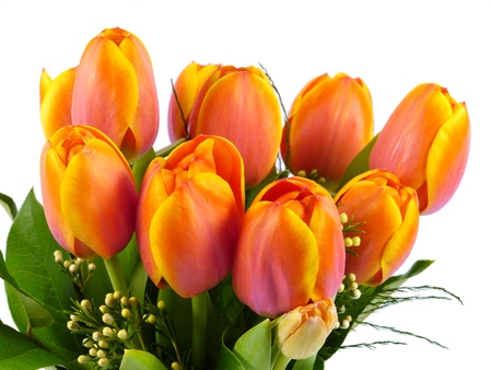 seasonally: A close up of bright flowering spring tulips in red orange and yellow Stock Photo