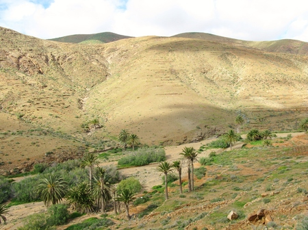 belongs: The green valley of Vega de Rio Palmas on the Canary Island Fuerteventura. This Island belongs to Spain Stock Photo
