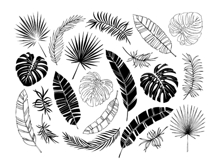 Set of tropical leaves. Drawing sketches of leaves. Vector illustration.