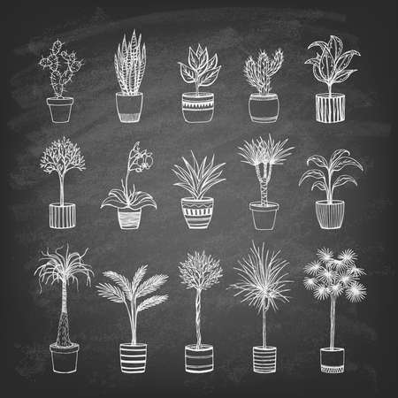 Set of indoor plants on the blackboard. Hand-drawn design elements. Vector illustration.