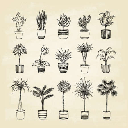 Set of indoor plants on old paper. Hand-drawn design elements. Vector illustration. 일러스트