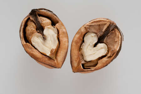 two halves of one walnut photo