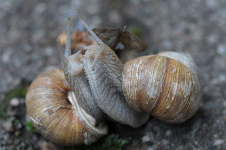 loving: loving snails