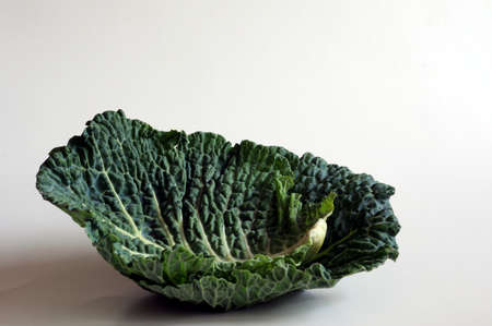 savoy: savoy cabbage leaf Stock Photo